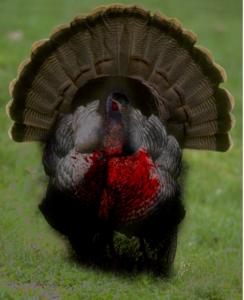 The First Zombie Turkey